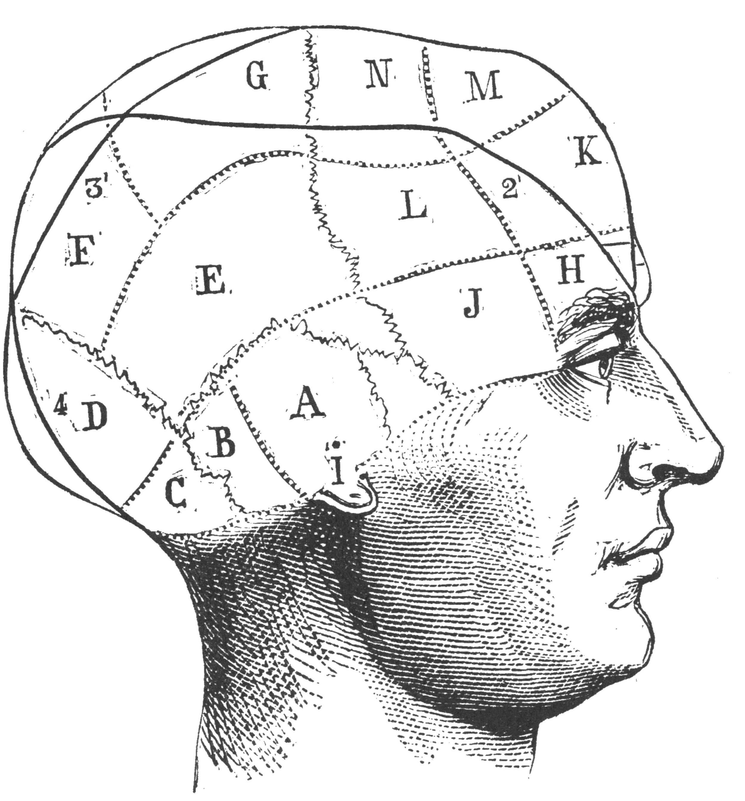 Phreno Head.jpg