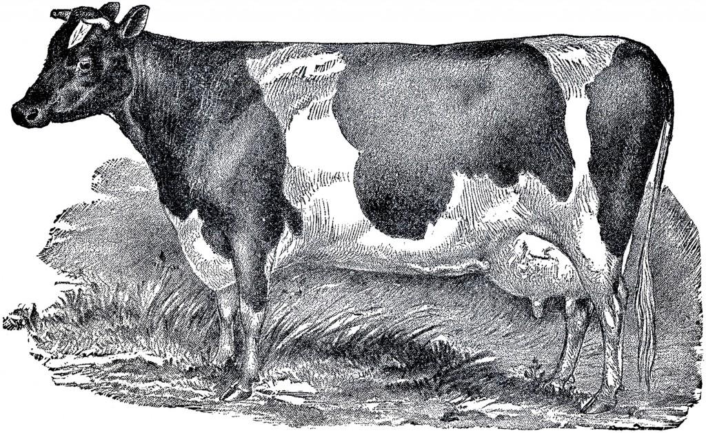Vintage-Farmhouse-Cow-Image-GraphicsFairy-1024x628.jpg