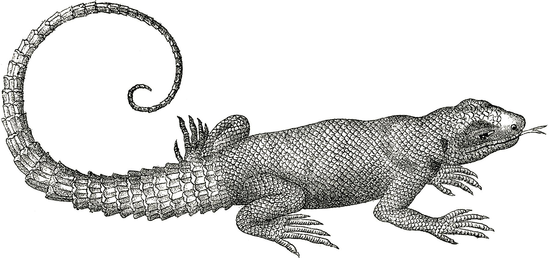 Free-Vintage-Lizard-Clip-Art-GraphicsFairy.jpg