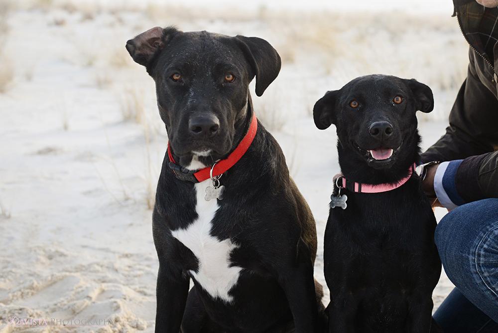 cute-dog-family-photos-jennifer