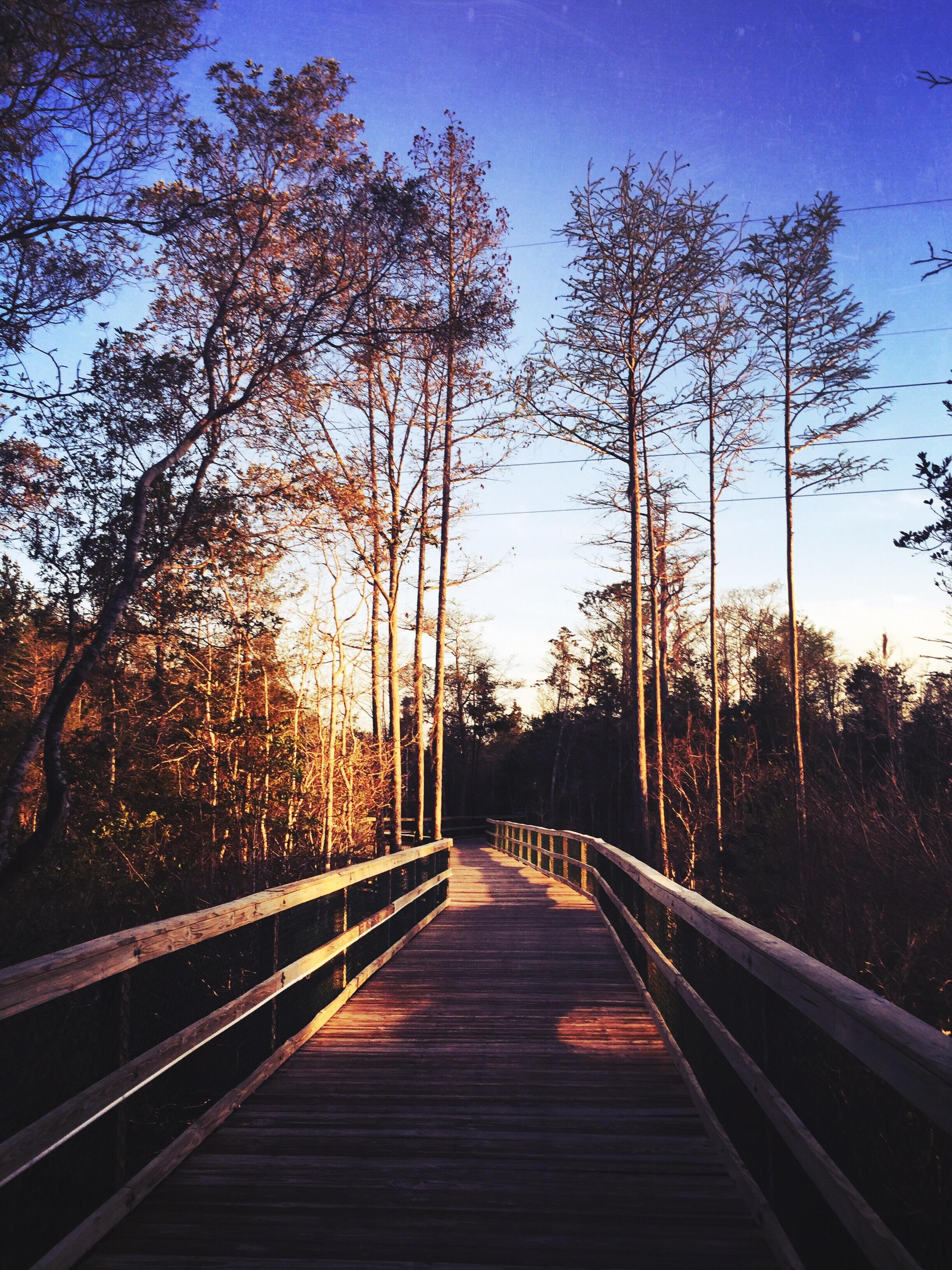 sunset-in-niceville-trees-beautiful-florida