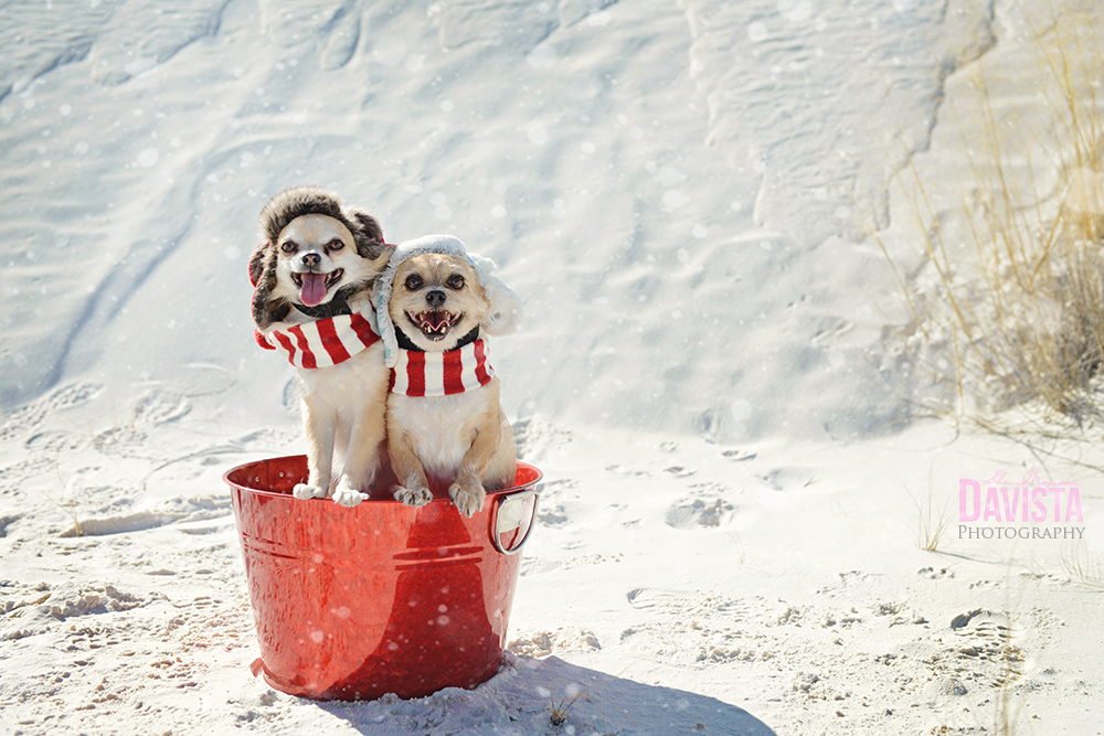 adorable-dog-pet-photography-white-sands