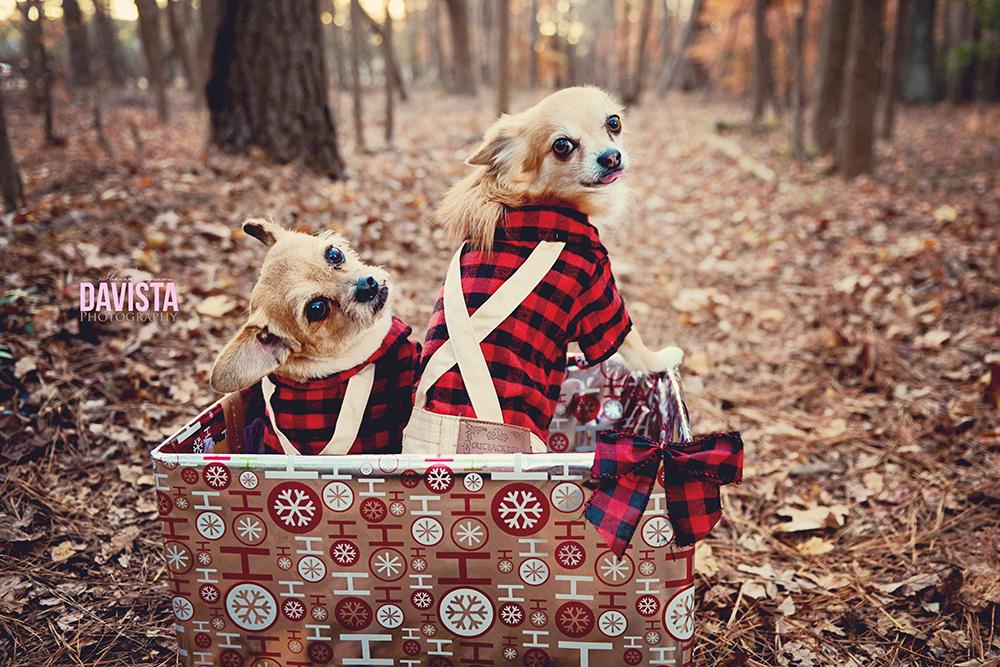 sandy bottom park Newport News puppy Christmas