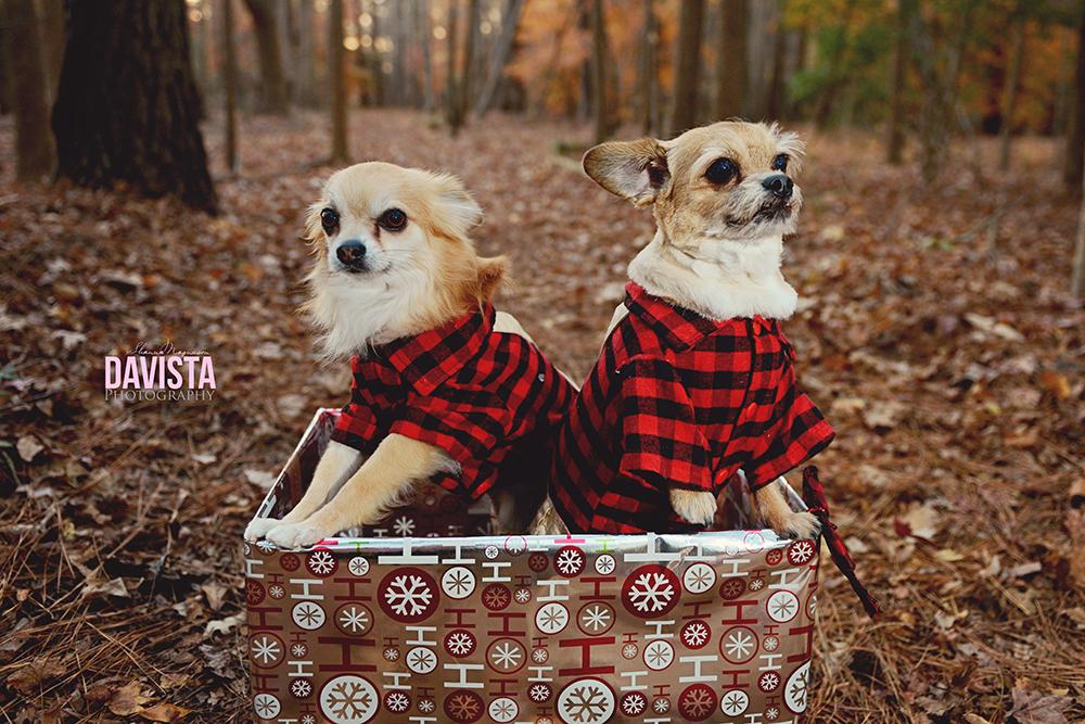 cute puppy dog photography Virginia