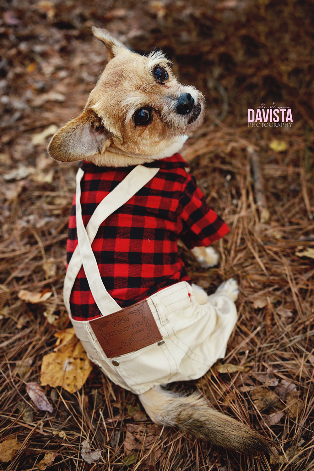 dog overalls and suspenders