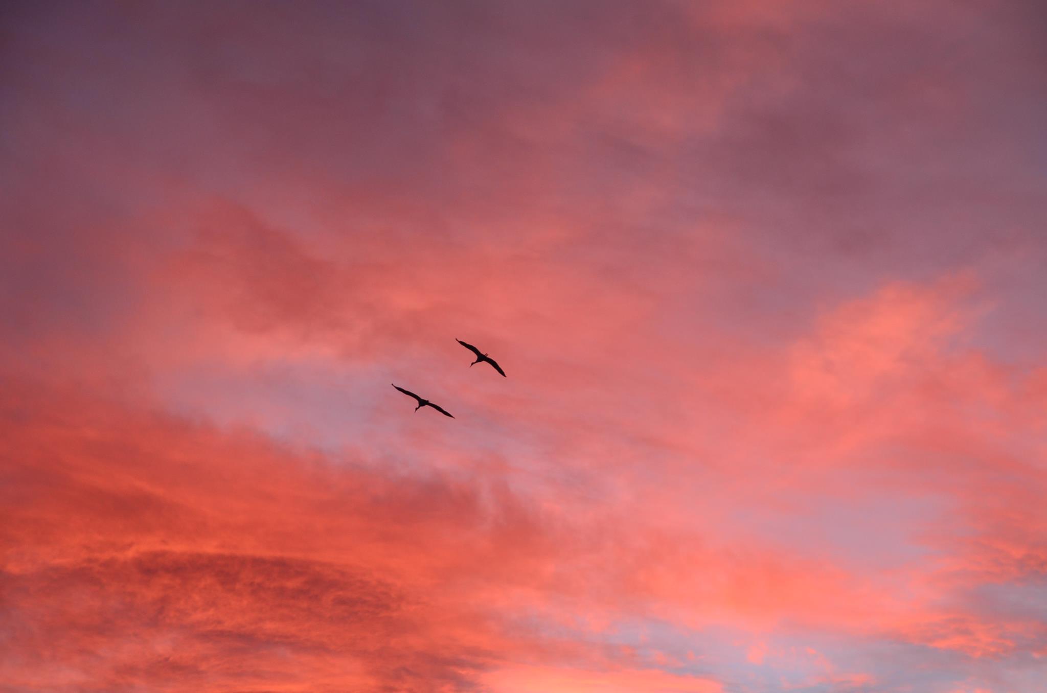 bosque-birds.jpg