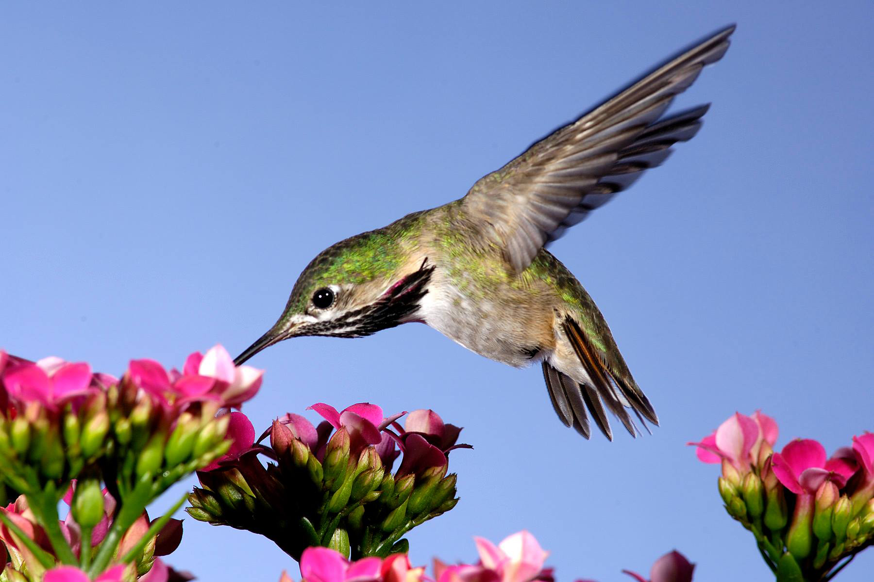 bosque-hummingbird.jpg