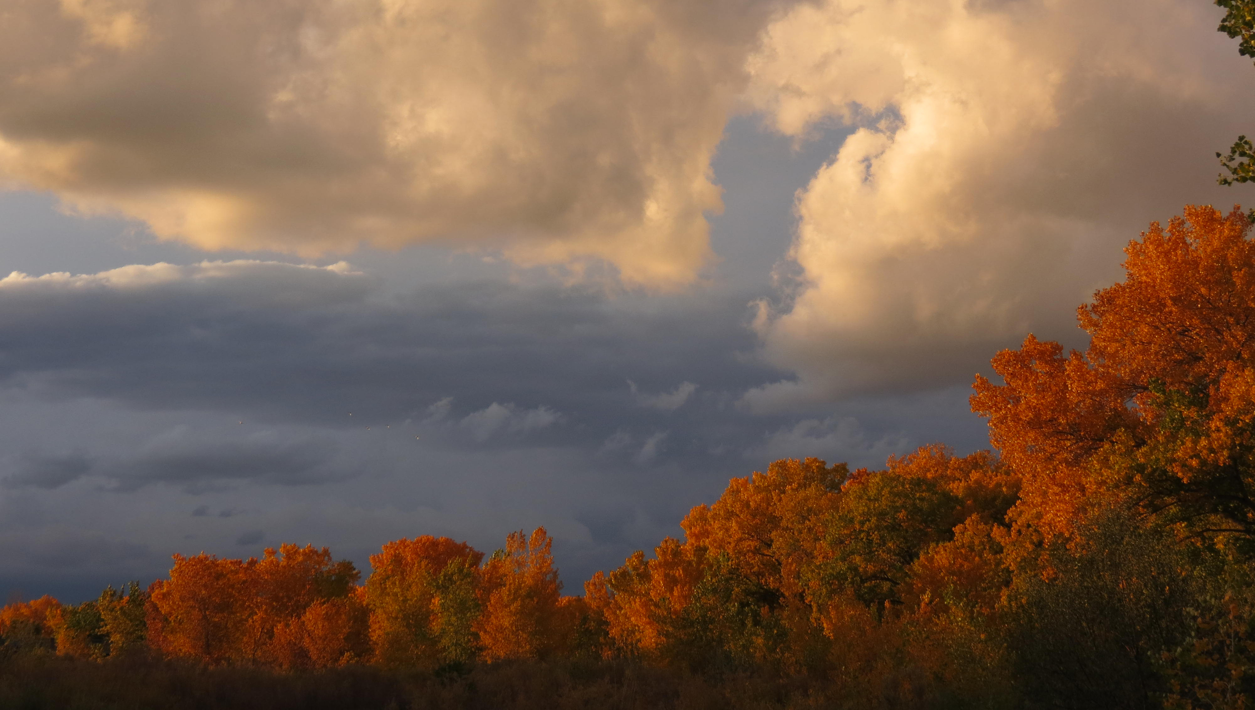 bosque-golden-clouds.jpg