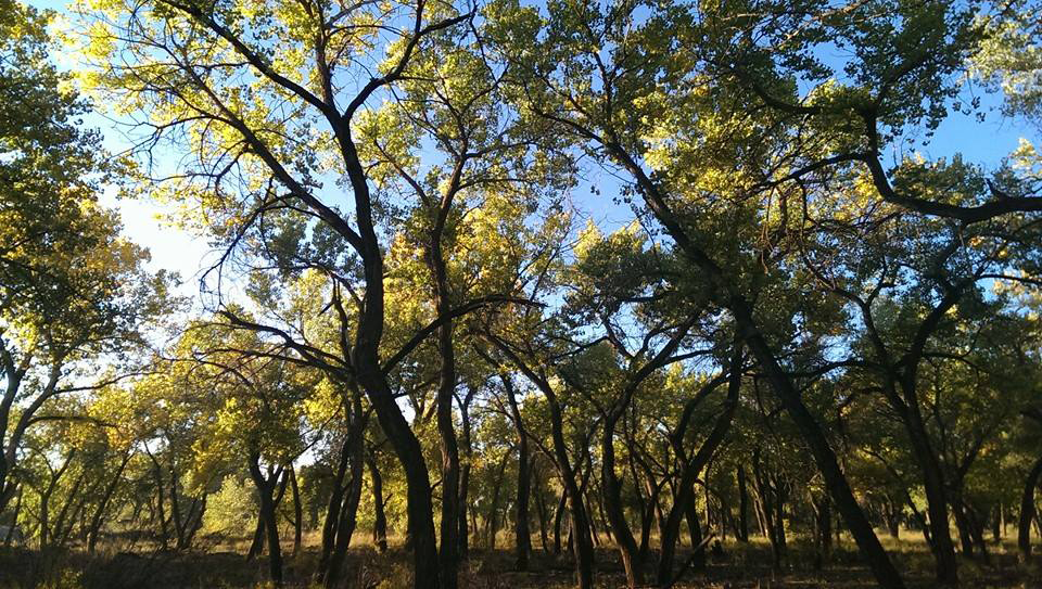 bosque-greenleaves.jpg