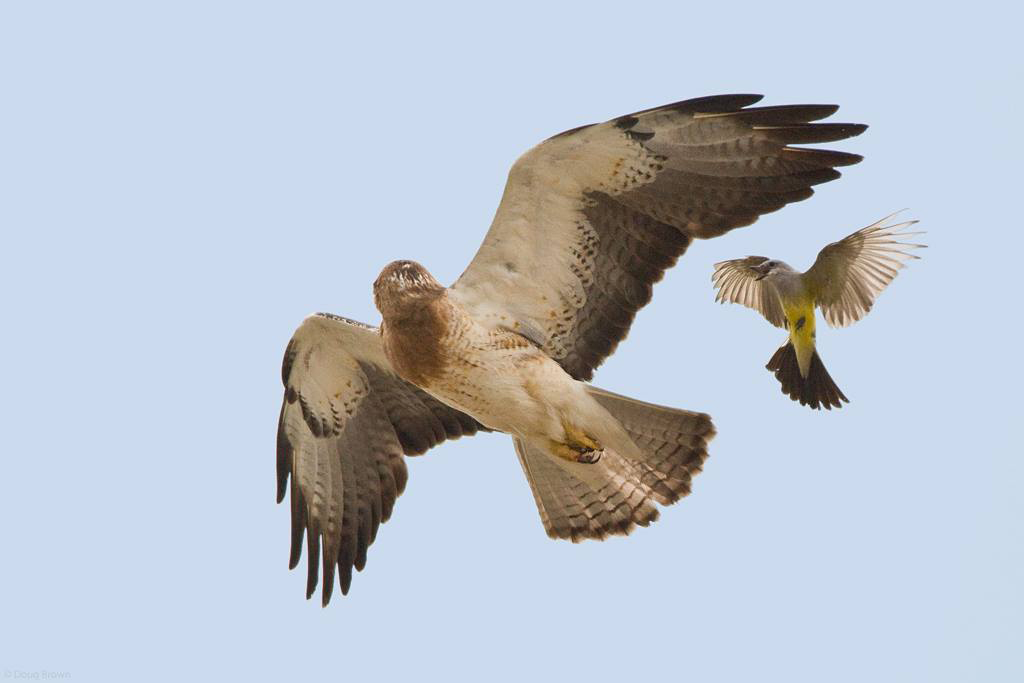"About - ""Our Vision""  Hawks Aloft"