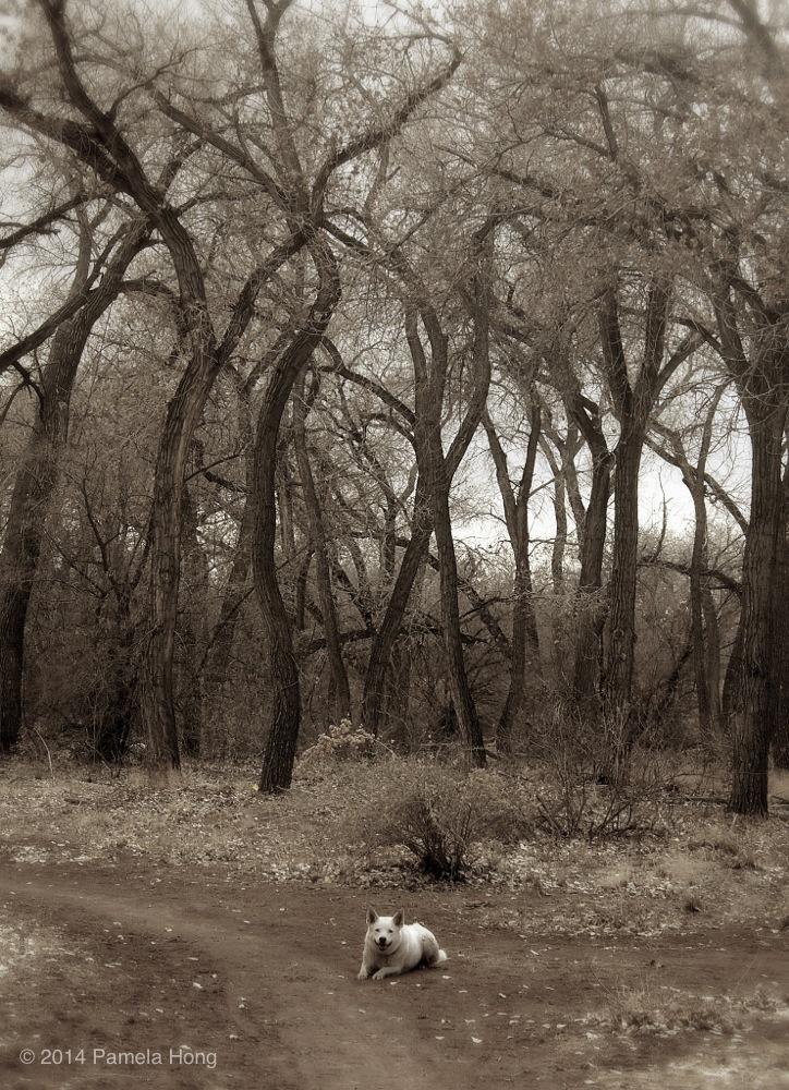 Bosque 10.jpg