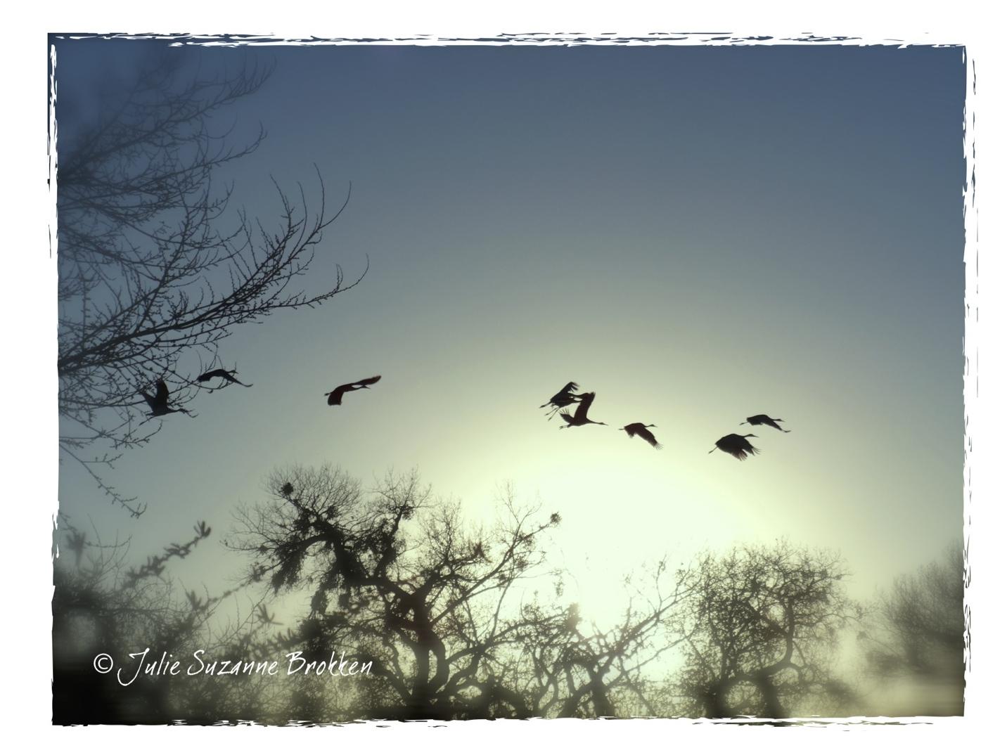 """SPRING Sedge of Wet Cranes"" by Julie SuZaNNe BroKKeN"