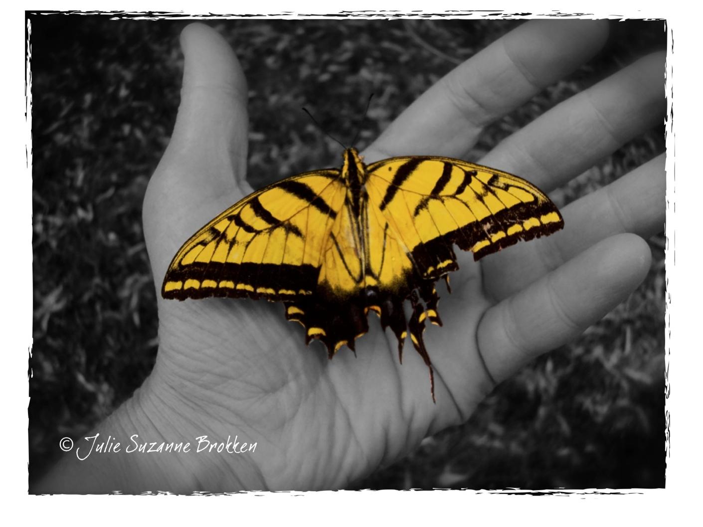 """SUMMER Butterfly Drinking"" by Julie SuZaNNe BroKKeN"