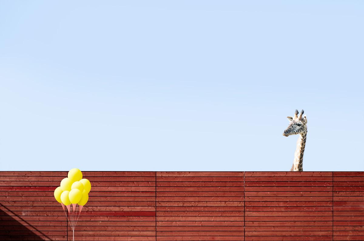 giraffe6.jpg