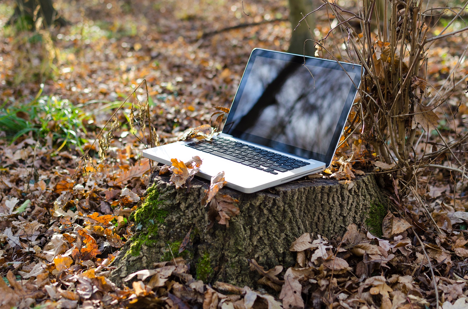 If a laptop falls in a forest, you're helping counter climate change!