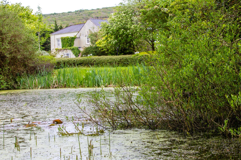 The pond at Gregans