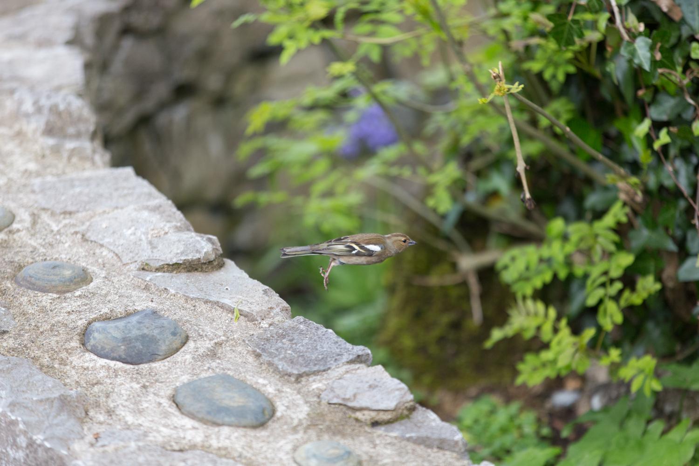 Bird! At the Burren Perfumery.