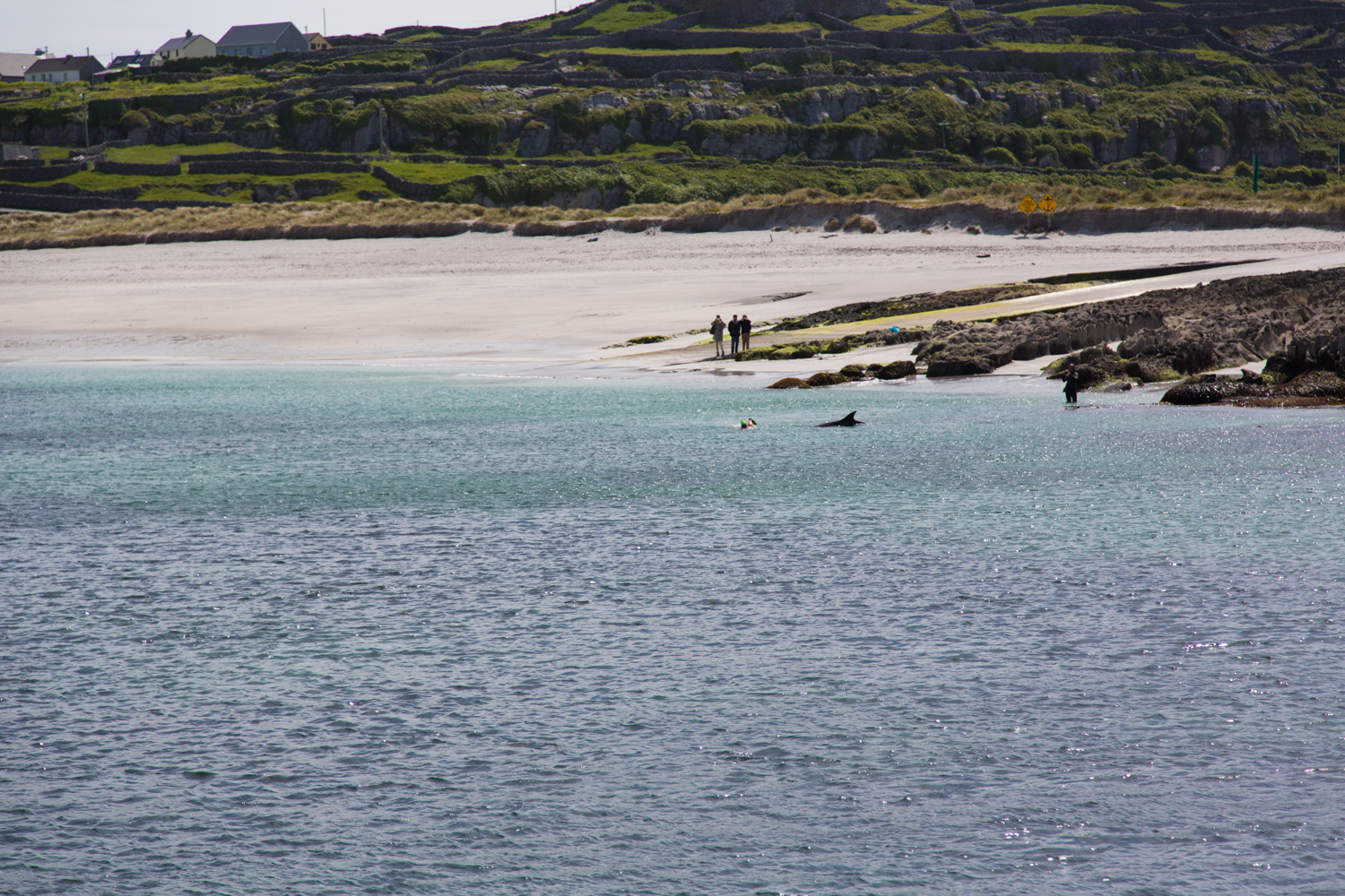 The local beach, the swimmer and the dolpin on the way back to the mainland.