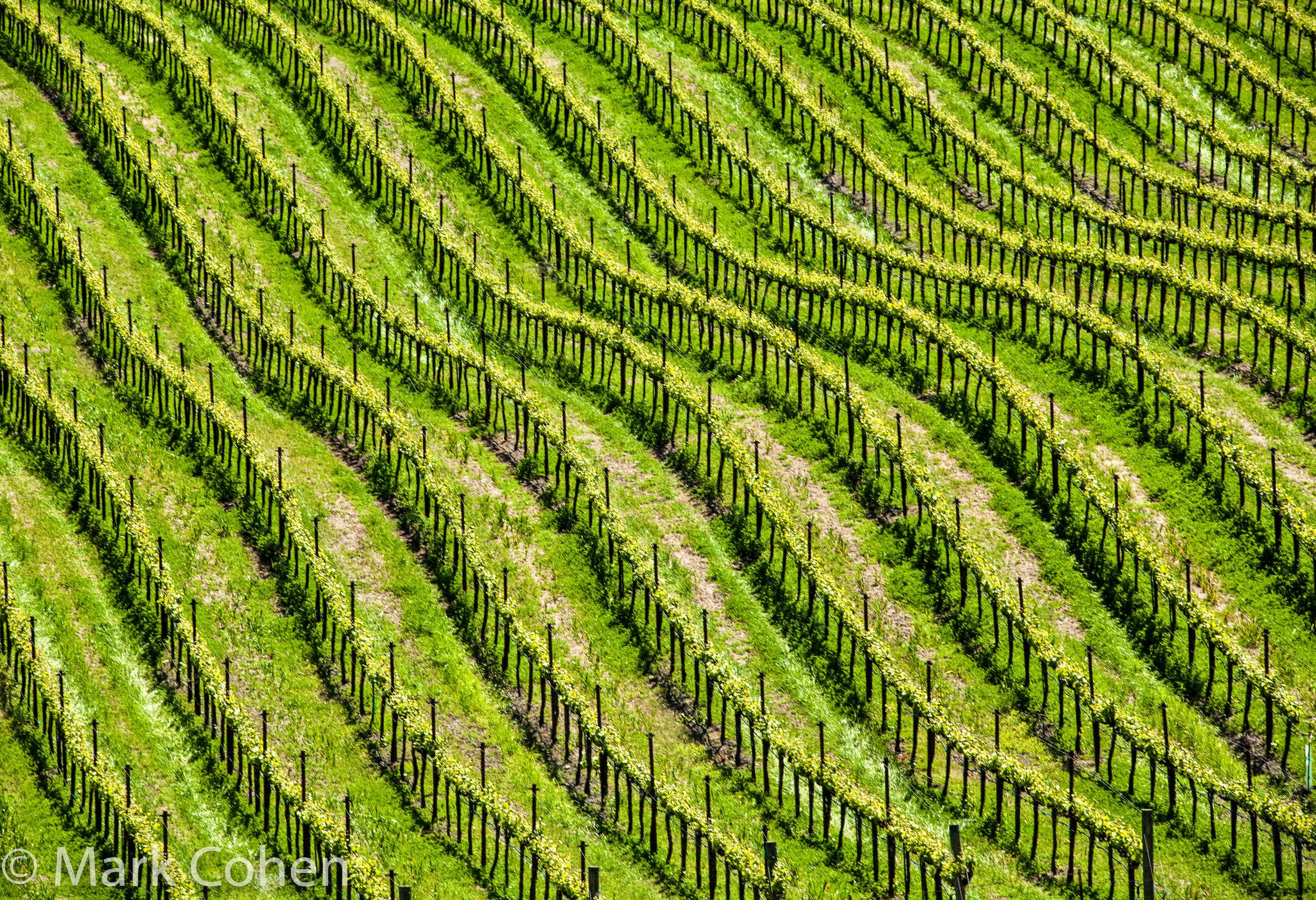 Vineyard no.1, Sonoma County, 2010