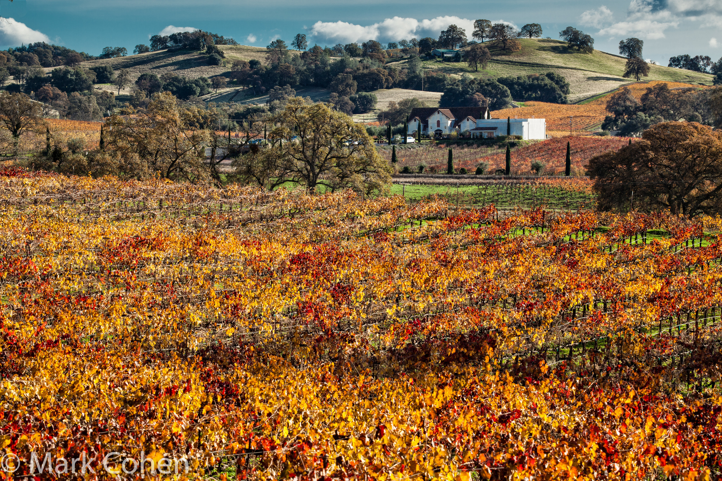Vineyard and Bella Piazza Winery no.1, Amador County, 2014