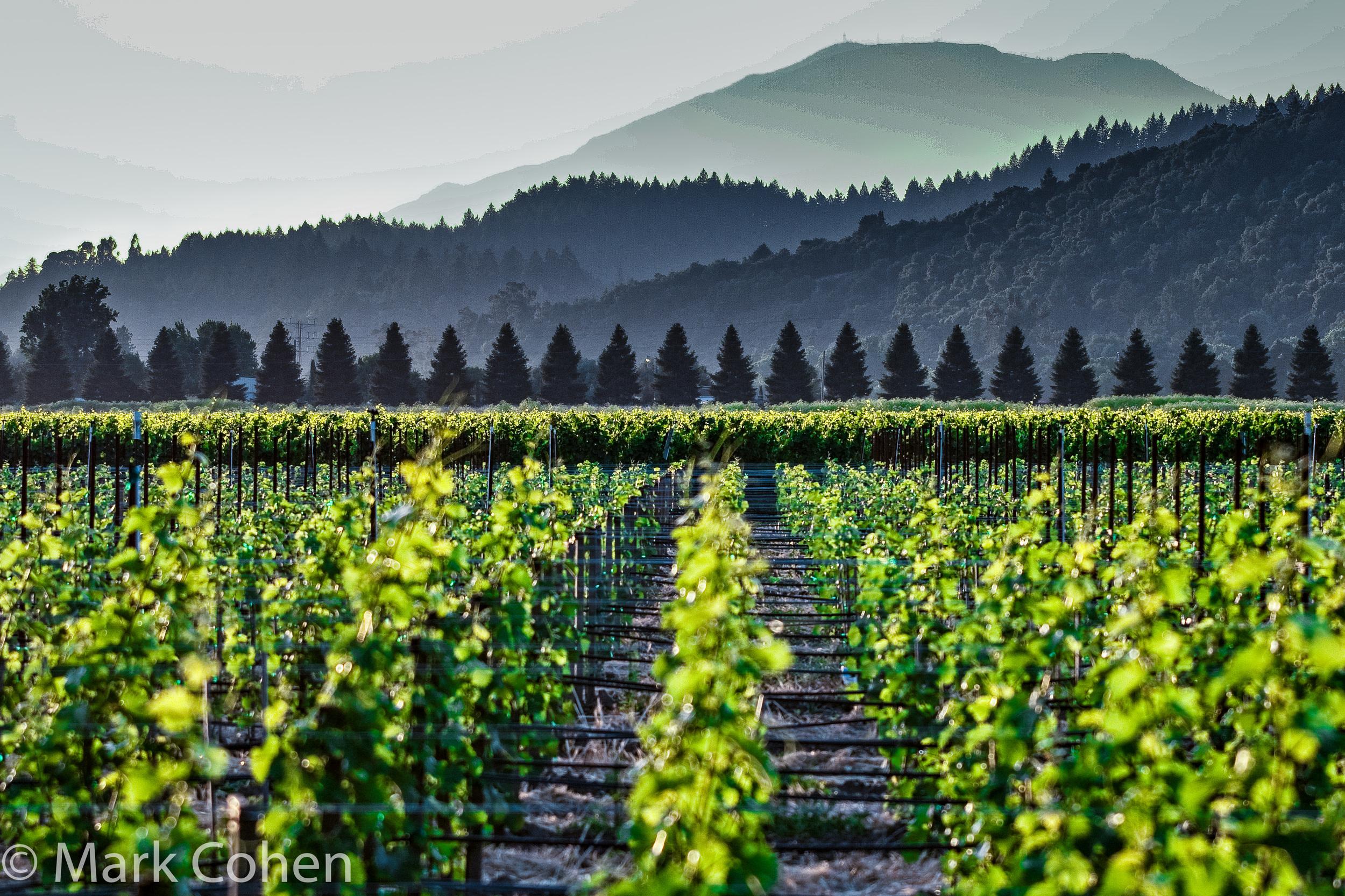 Vineyard no.1, Napa Valley, 2007