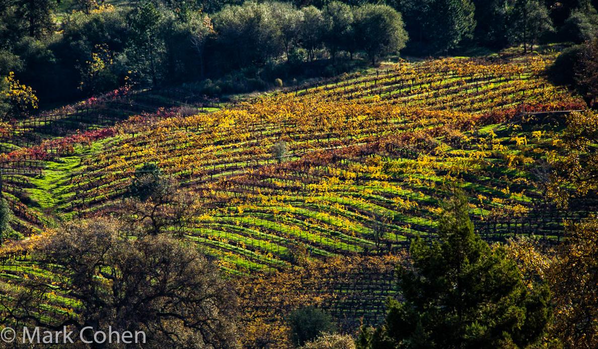 Vineyard no.6, Amador County, 20014