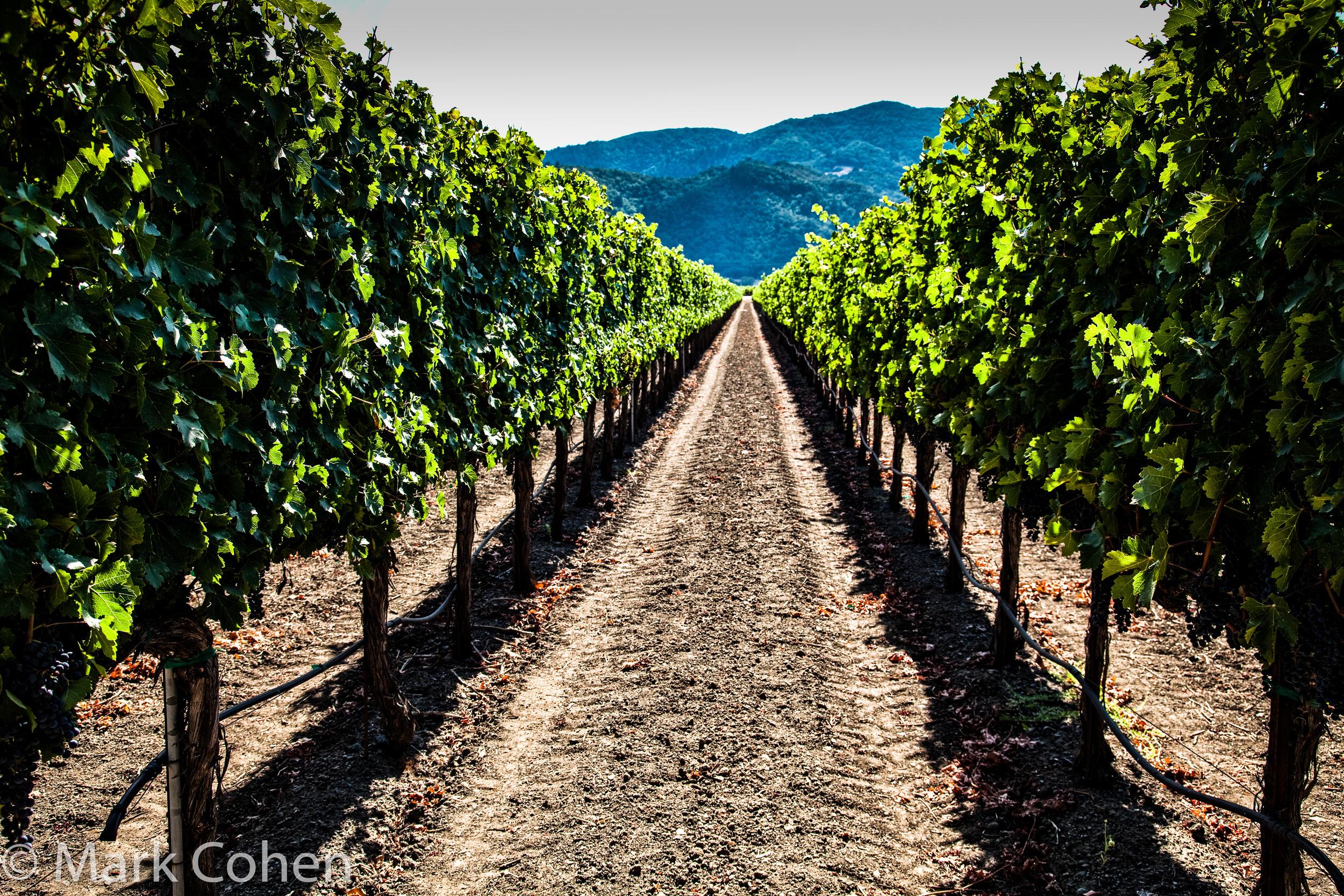 Vineyard no.7, Napa Valley, 2014