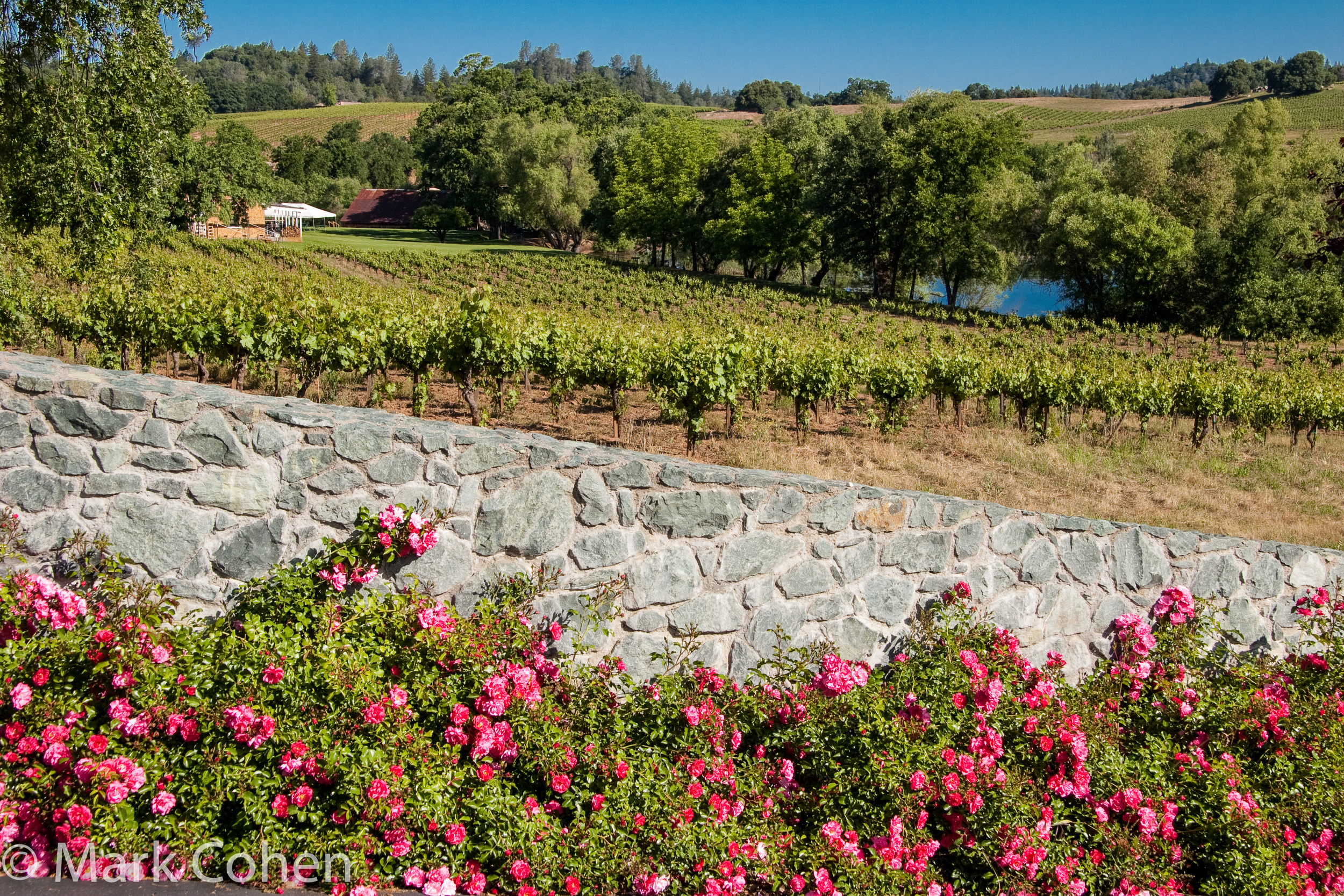 Vineyard and Deaver Winery, Amador County, 2006