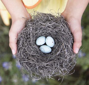 bha_web_eggs_in_nest.jpg