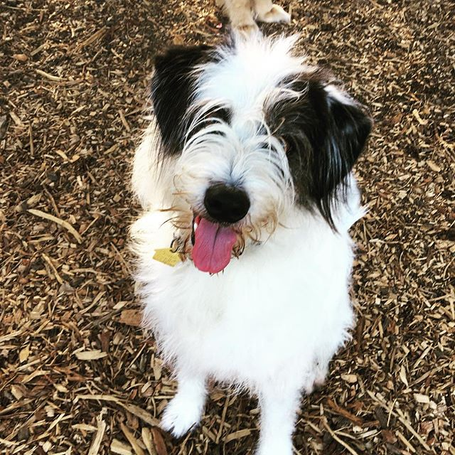 Hello cuteness #marin #dogs #sausalitodog