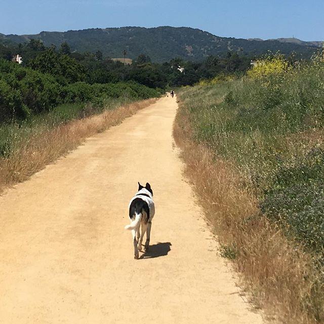 Exploring new roads today. #marin #hamiltonfieldnovato #doghike
