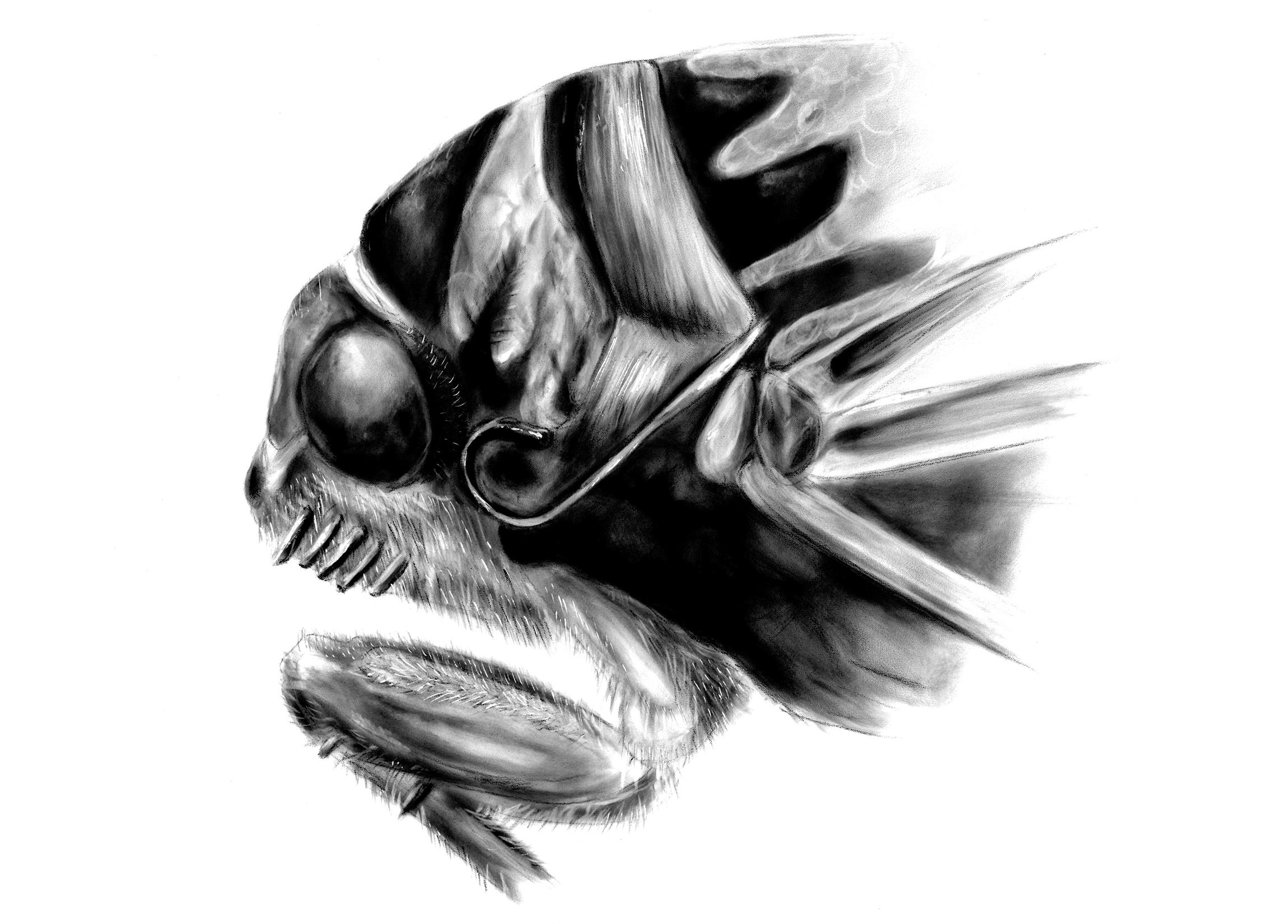 cicada_head.jpg