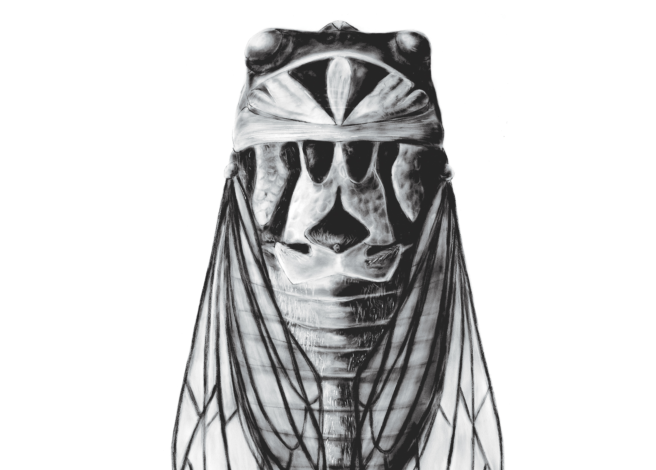 cicada_body.jpg