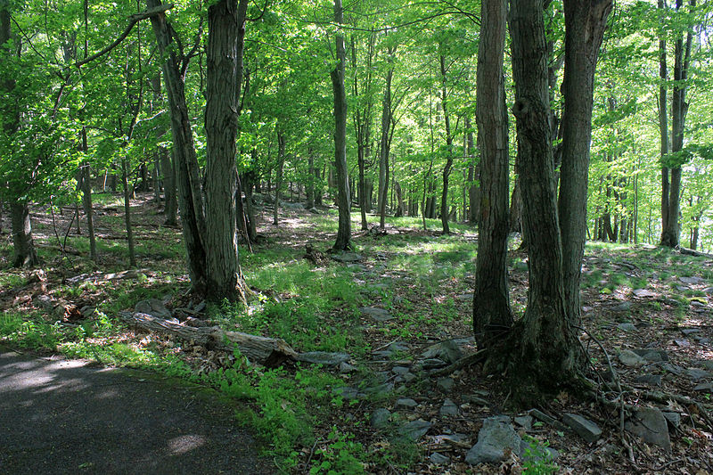 Gfp-new-york-wellesley-island-state-park-forest-path.jpg