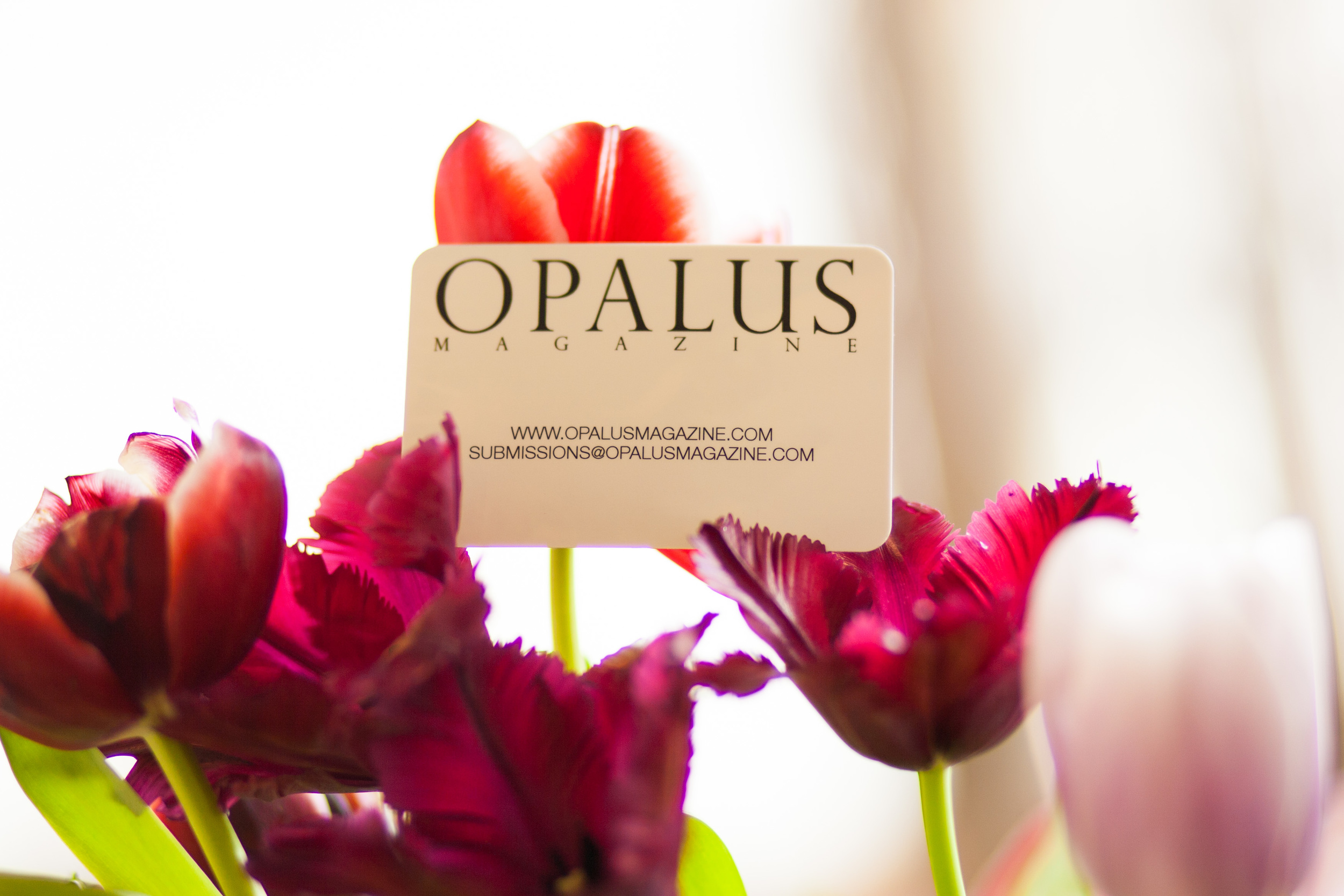 OPALUS_submissions-1.jpg
