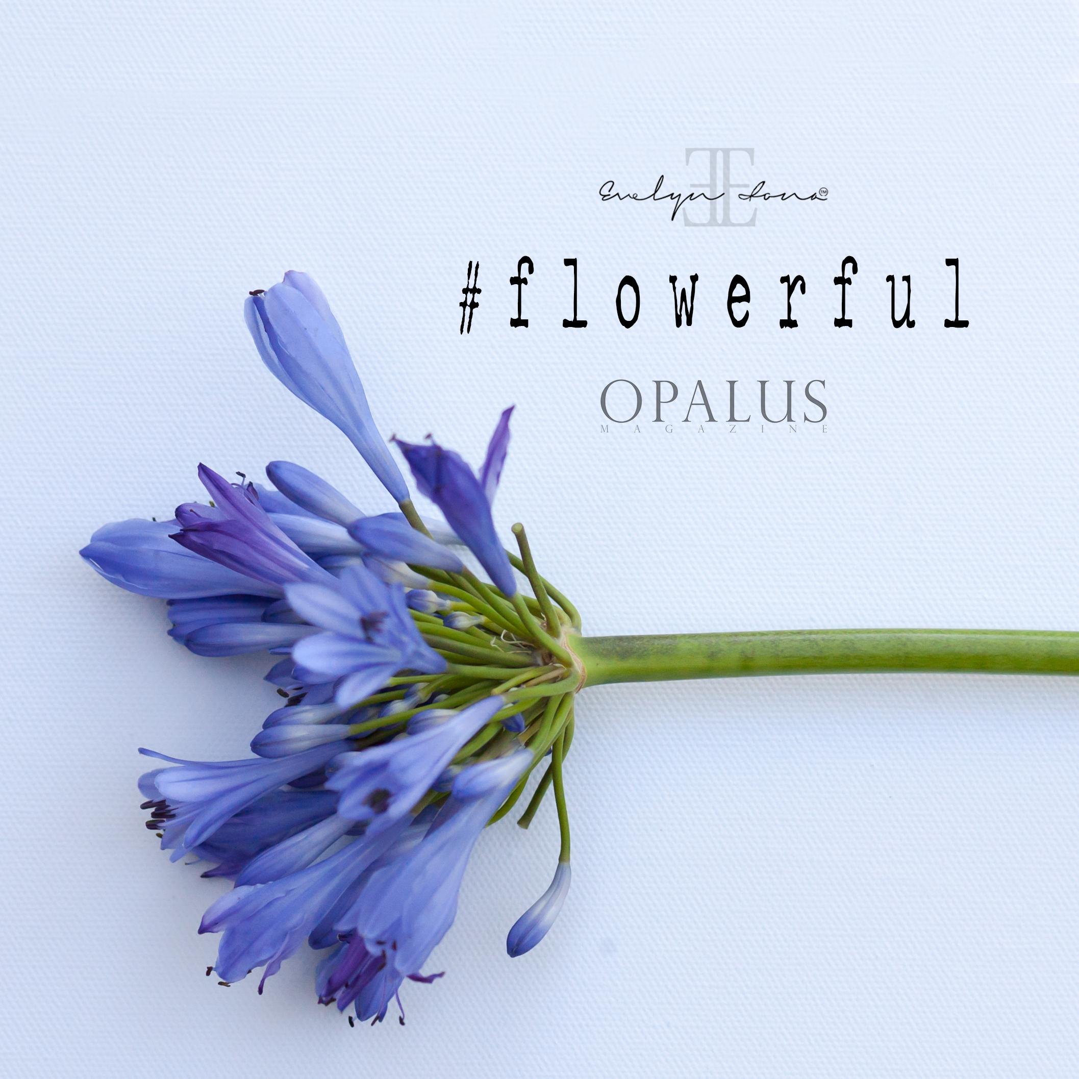 Flowerful_day9.jpg