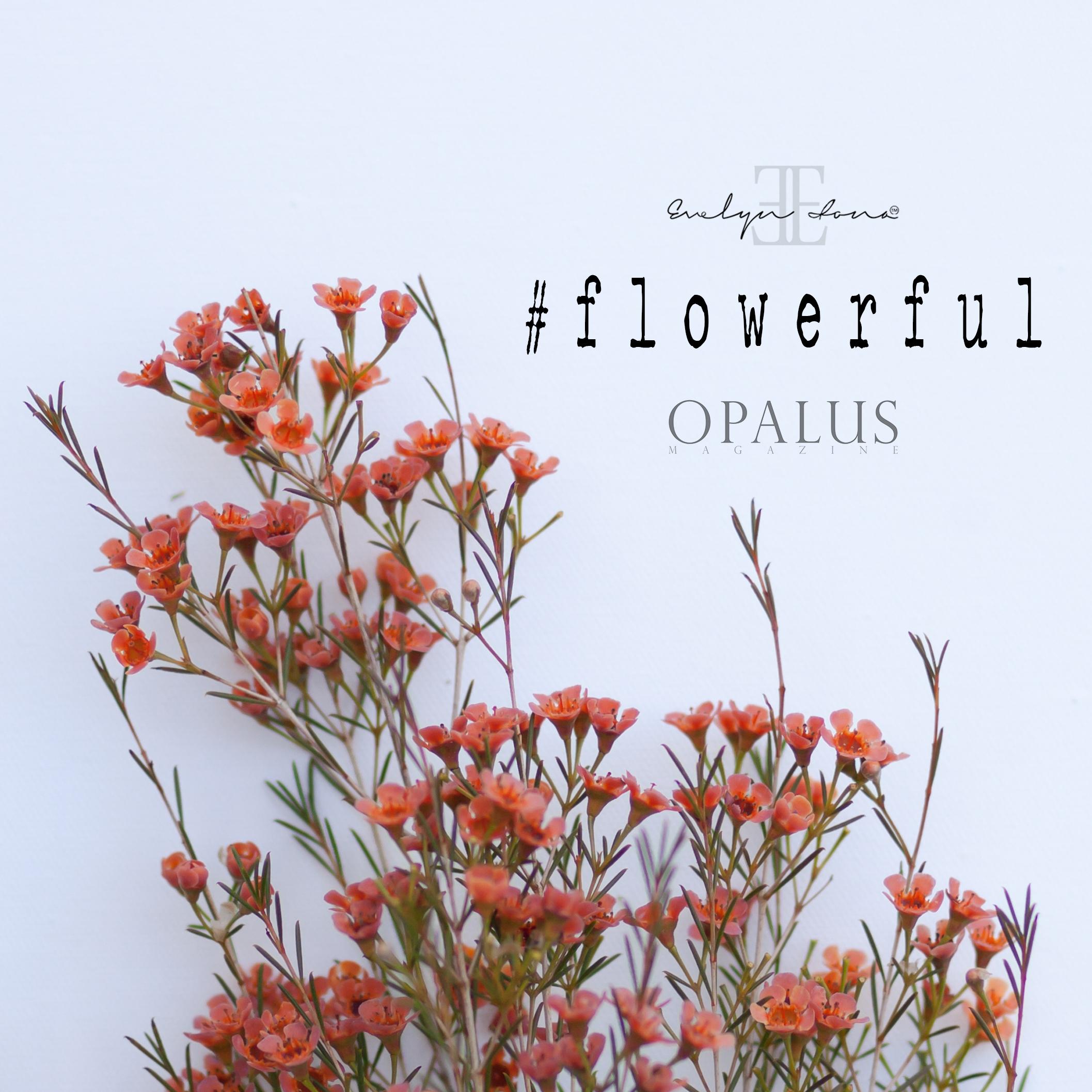 Flowerful_day7.jpg