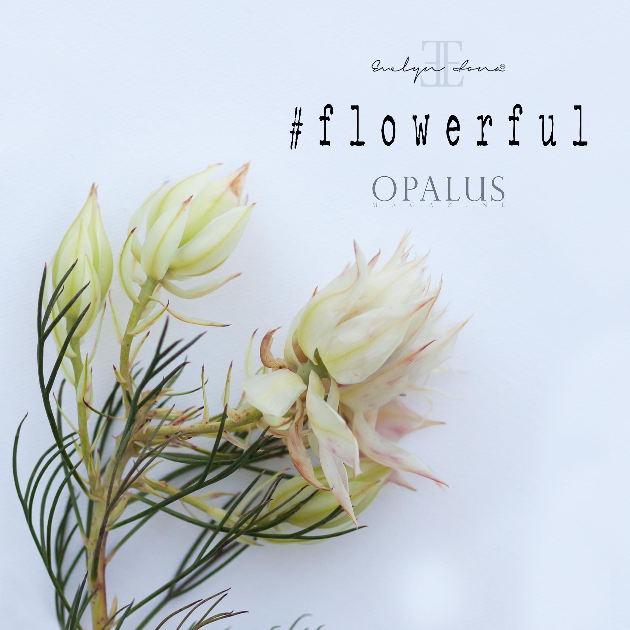 Flowerful_day3.jpg