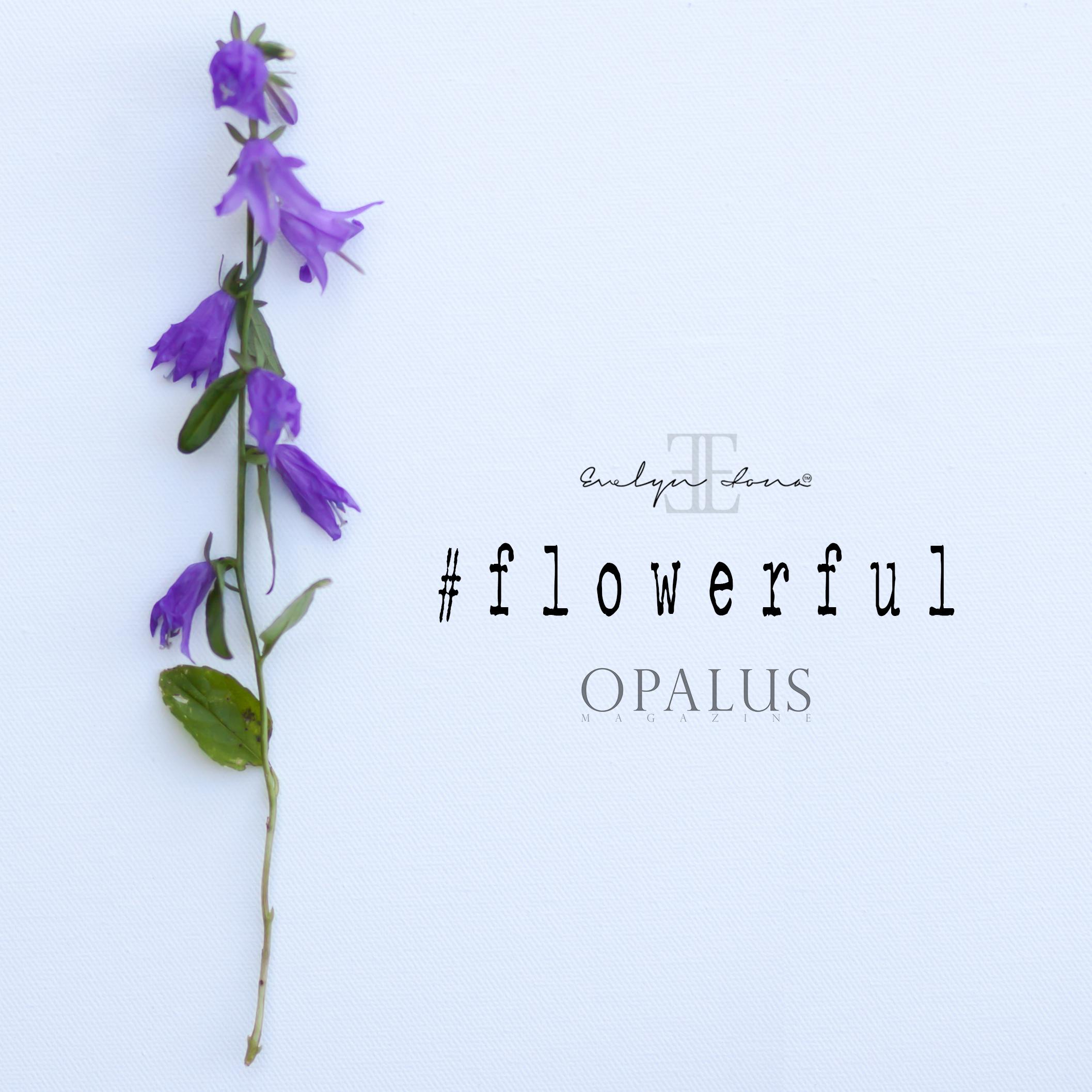 Flowerful_day4.jpg