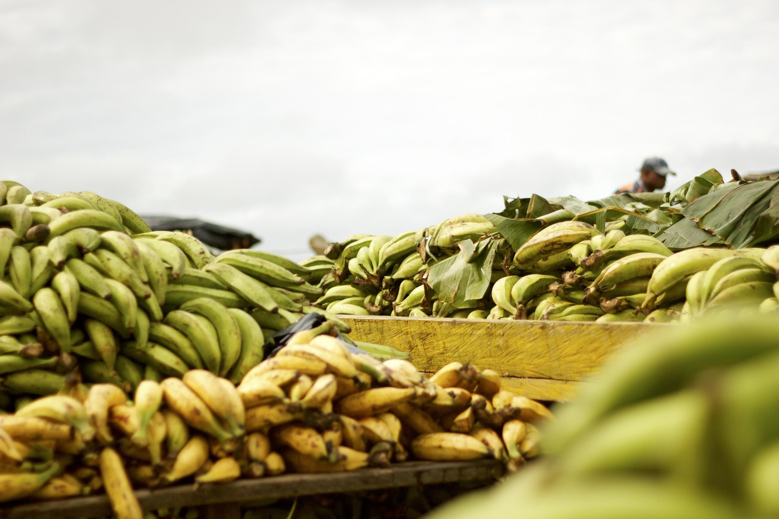 Plátanos. Quibdó, 2013.