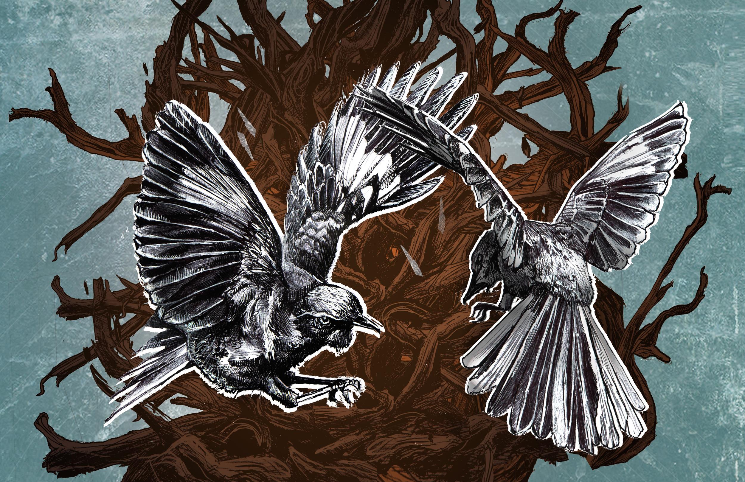 birds fighting 11x17.jpg