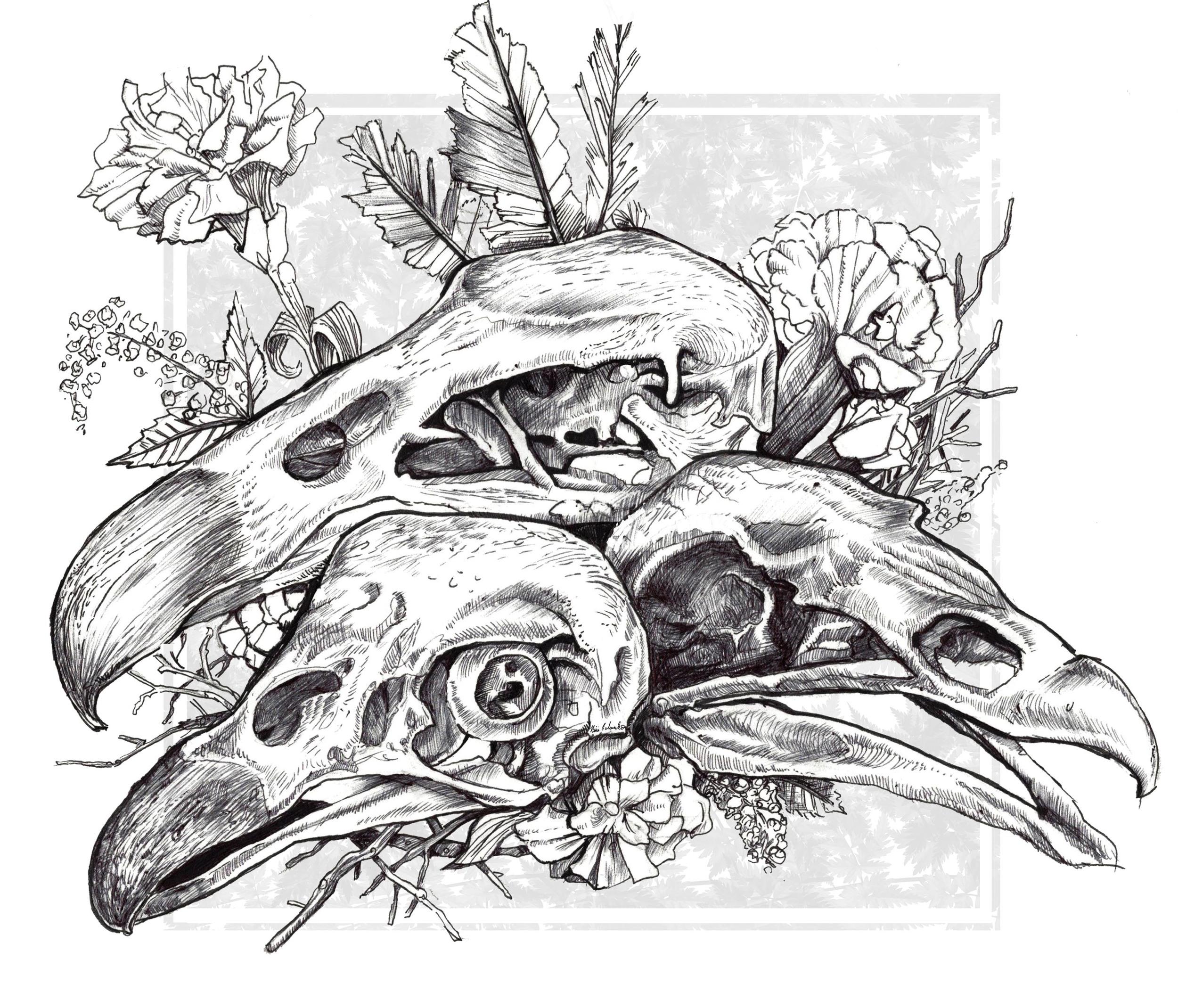 vulture skulls promo.jpg