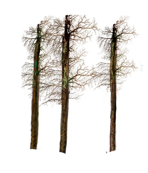 trees and grass1.png