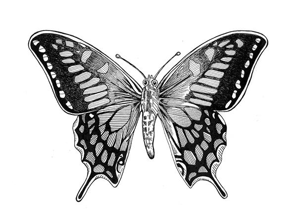 tw_butterfly_V2.jpg