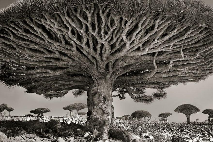 Photo by Beth Moon
