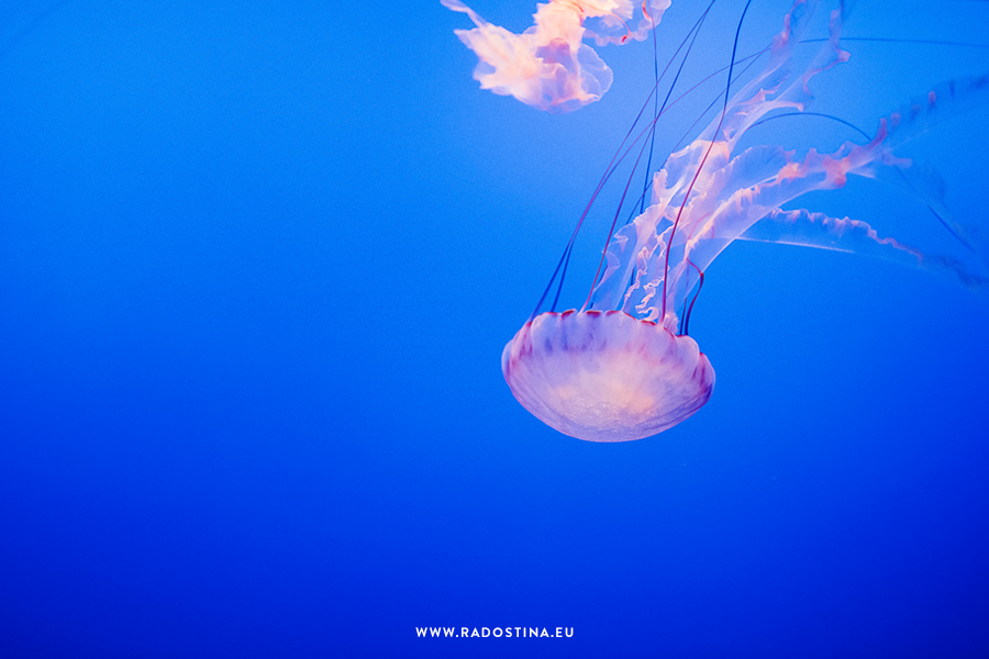 radostina_monterey_bay_aquarium_06.png