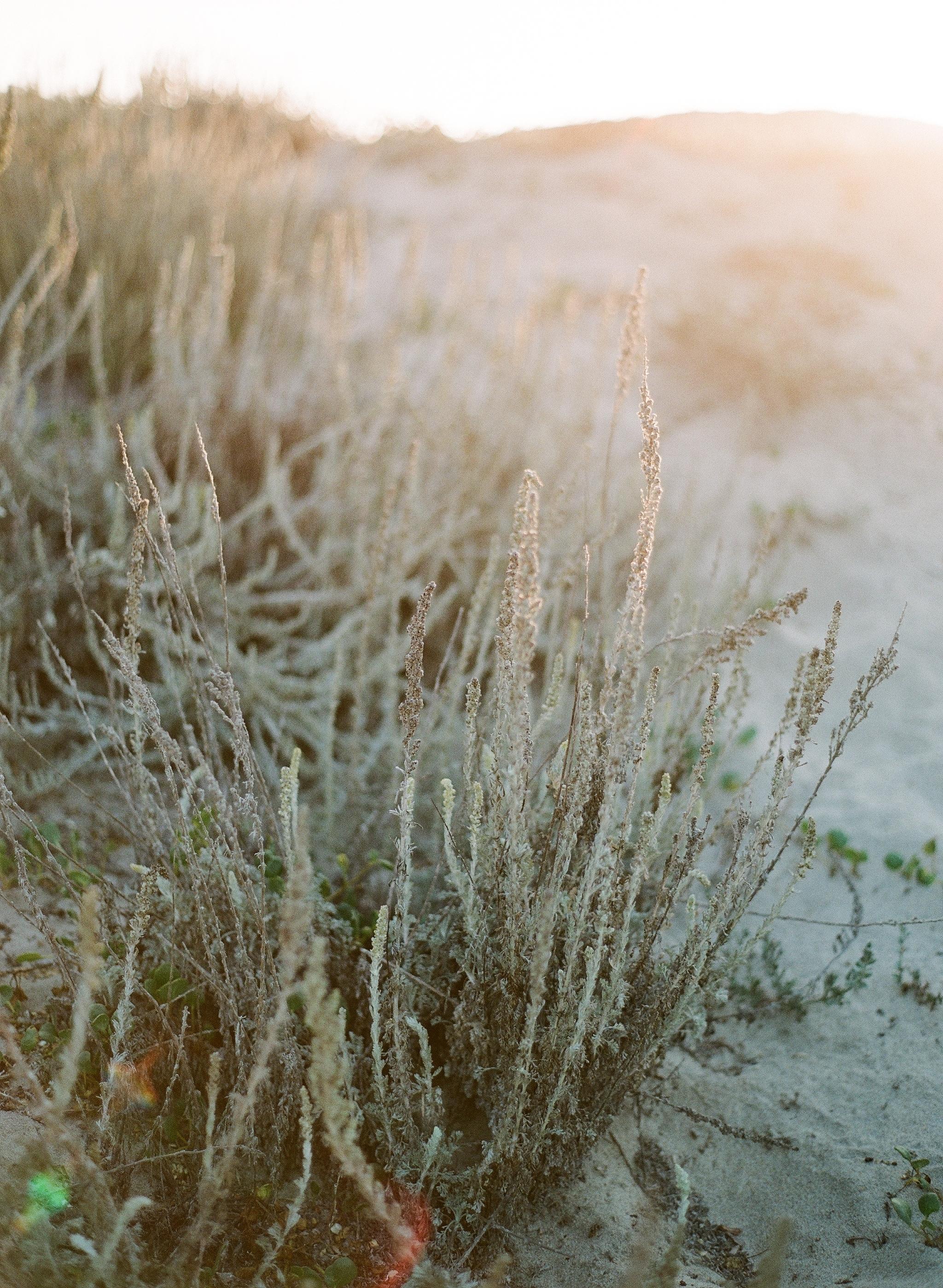 The plants near Moss Landing, California