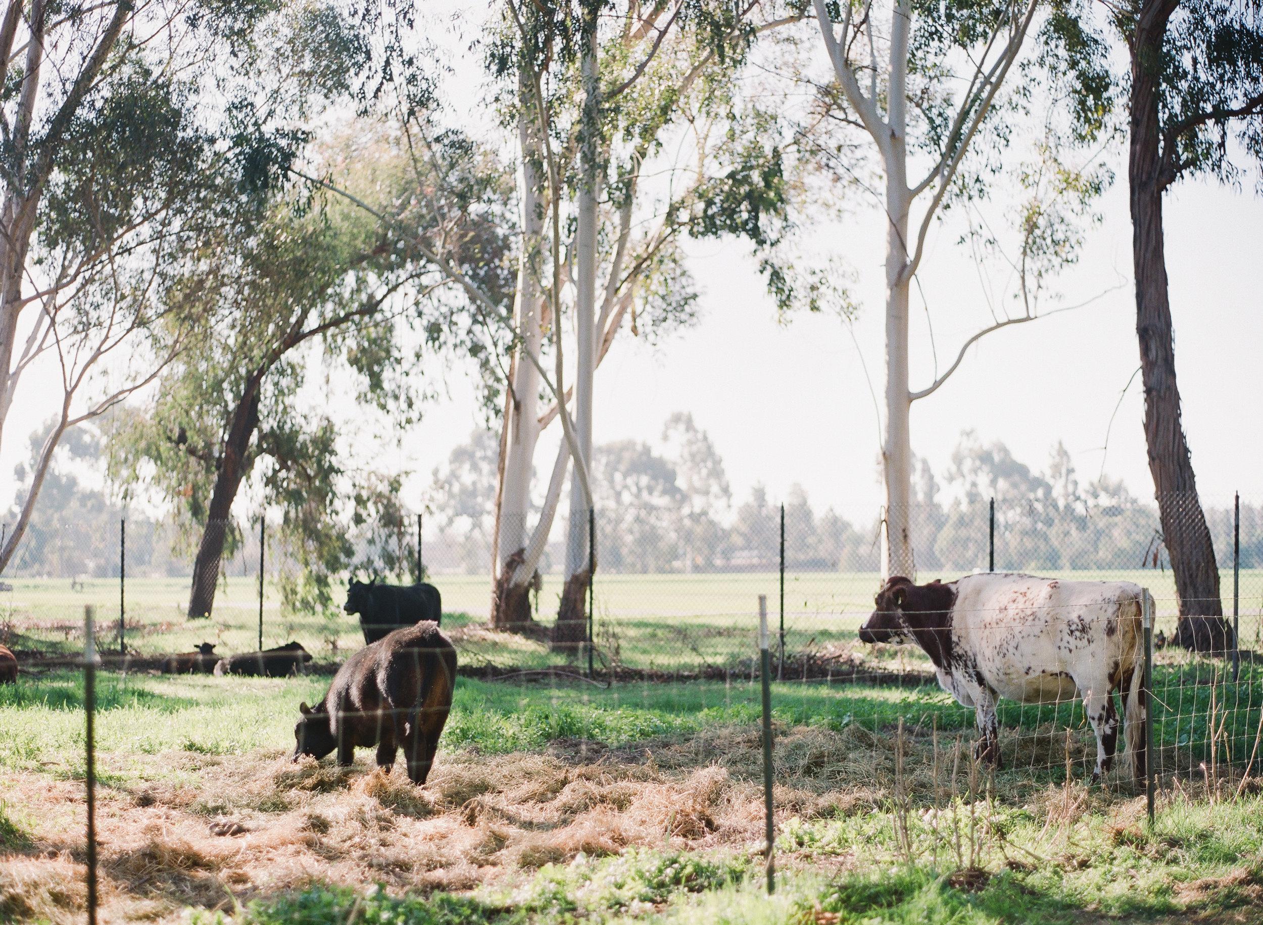 radostina_boseva_ardenwood_historic_farm_02