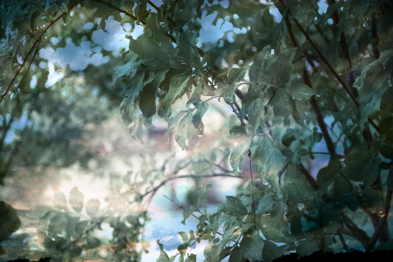Landscapes3.jpg