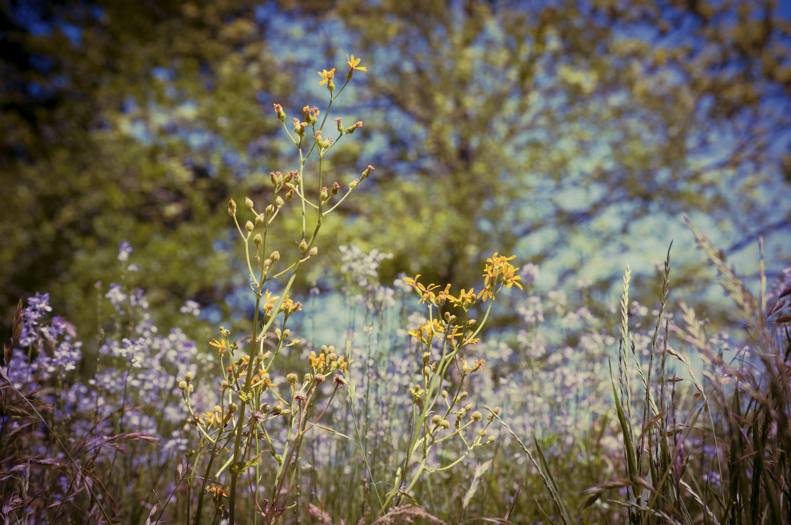 The field flowers were worth the allergies that day :)